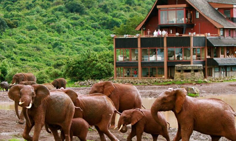 Aberdares National Park Safari 1