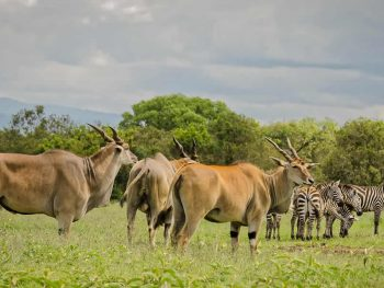 Aberdares National Park Safari