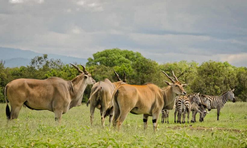 Aberdares National Park Safari 3