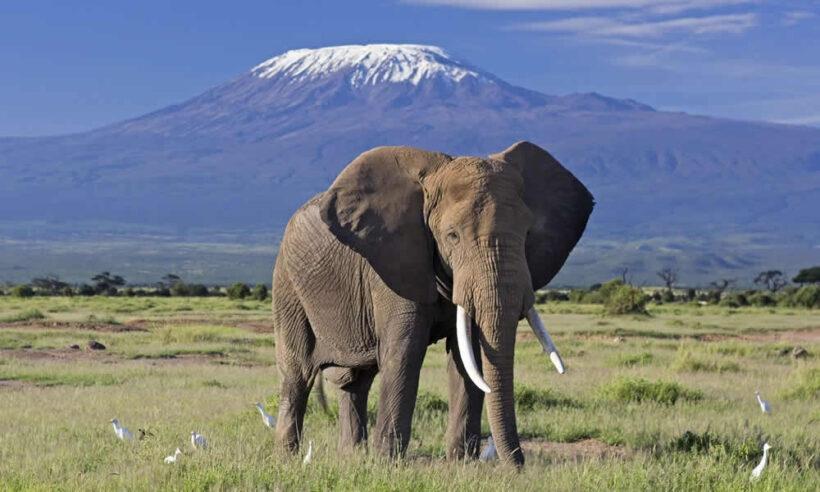 2 Day Amboseli Safari