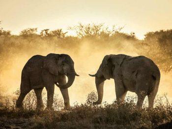Tsavo West, Amboseli Safari