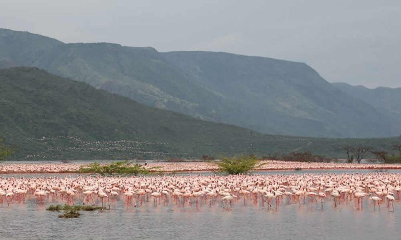 Lake_Nakuru_Safari_1