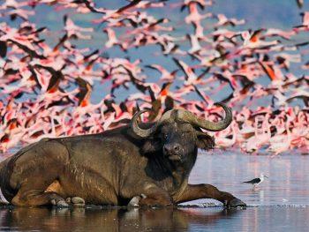 Naivasha Lake Nakuru Safari