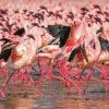 Lake-Nakuru-Flamingoes