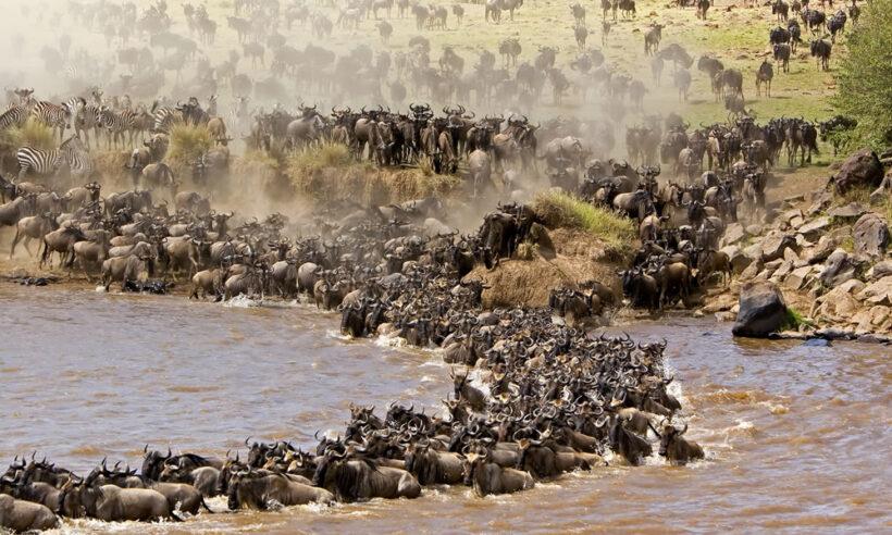 masai-mara-wild-beast-migration